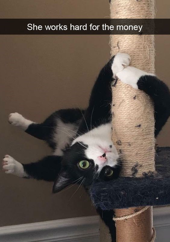 a cute picture of a black and white cat hanging on a cat climbing pole