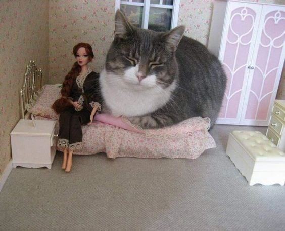 a cute picture of a grey cat sitting inside a doll house next to a barbie doll