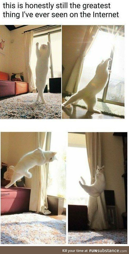 a cute picture of a white cat dancing and jumping around