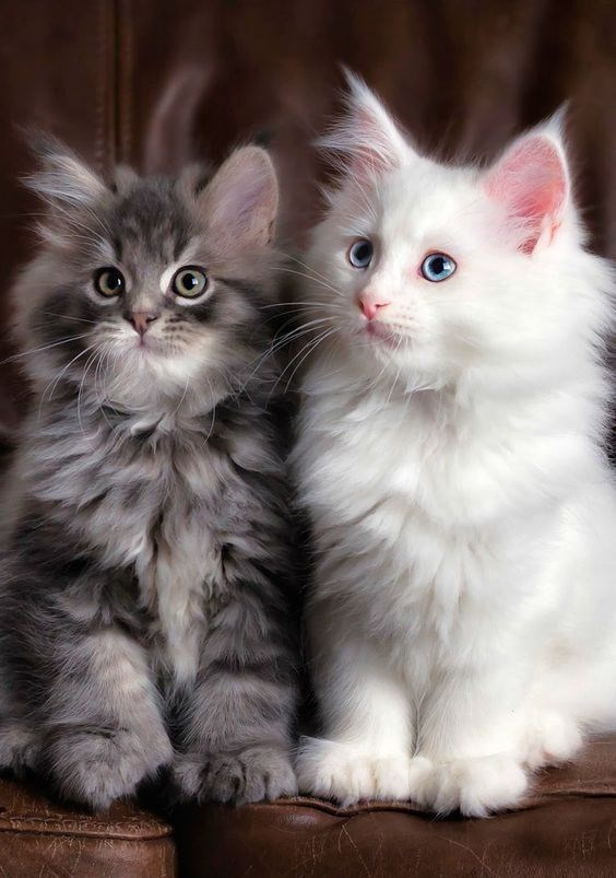 a cute picture of two kittens