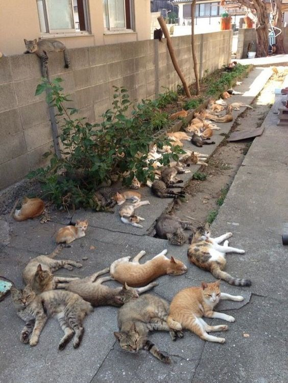 a cute picture of lots of cats lying on the ground outside a building