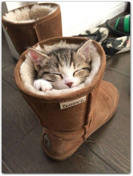 a cute picture of a kitten inside an ugg boot with its eyes closed