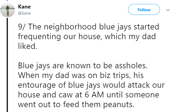 Asian Ron Swanson - Text - Kane Follow @kane 9/ The neighborhood blue jays started frequenting our house, which my dad liked Blue jays are known to be assholes. When my dad was on biz trips, his entourage of blue jays would attack our house and caw at 6 AM until someone went out to feed them peanuts.
