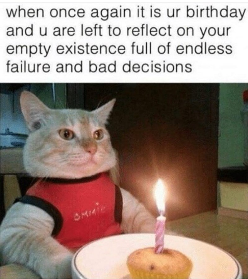 happy birthday meme - Cat - when once again it is ur birthday and u are left to reflect on your empty existence full of endless failure and bad decisions MM