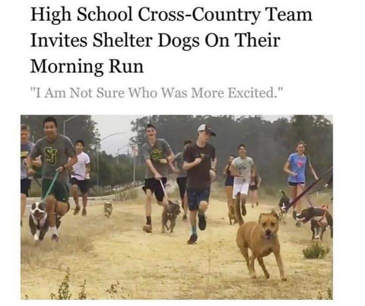 """wholesome meme - Cani cross - High School Cross-Country Team Invites Shelter Dogs On Their Morning Run """"I Am Not Sure Who Was More Excited."""""""