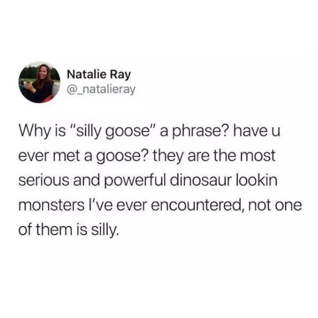 "Meme - Text - Natalie Ray @natalieray Why is ""silly goose"" a phrase? have u ever met a goose? they are the most serious and powerful dinosaur lookin monsters I've ever encountered, not of them is silly."