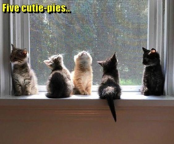 Cat - Five cutie-pies..