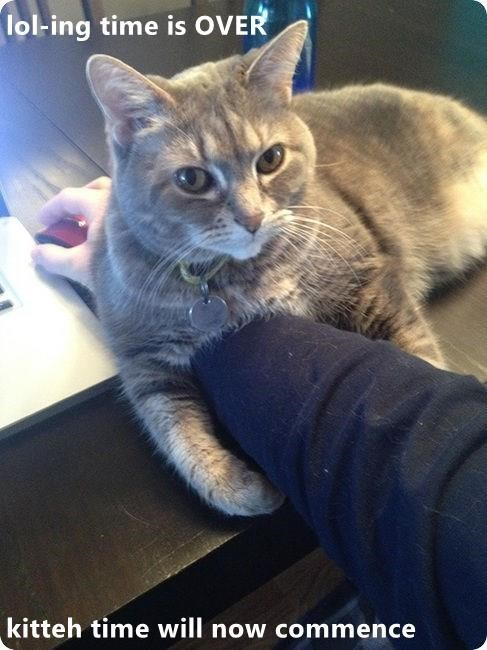 Cat - lol-ing time is OVER kitteh time will now commence
