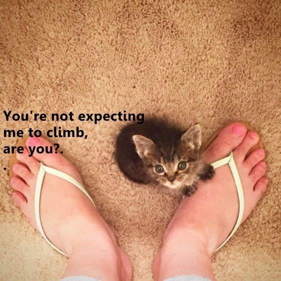 Cat - You're not expecting me to climb, are you?.