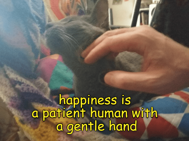 Hair - happiness is a patient human with a gentle hand