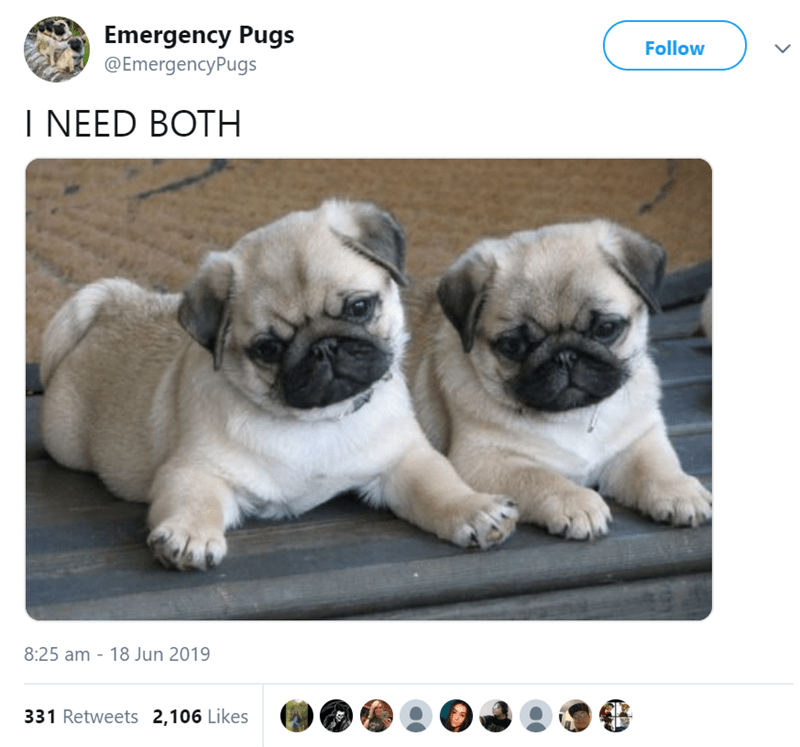 pug tweet - Dog - Emergency Pugs @EmergencyPugs Follow I NEED BOTH 8:25 am - 18 Jun 2019 331 Retweets 2,106 Likes