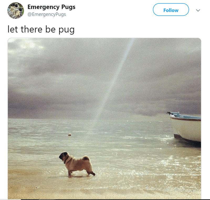 pug tweet - Sky - Emergency Pugs Follow @EmergencyPugs let there be pug