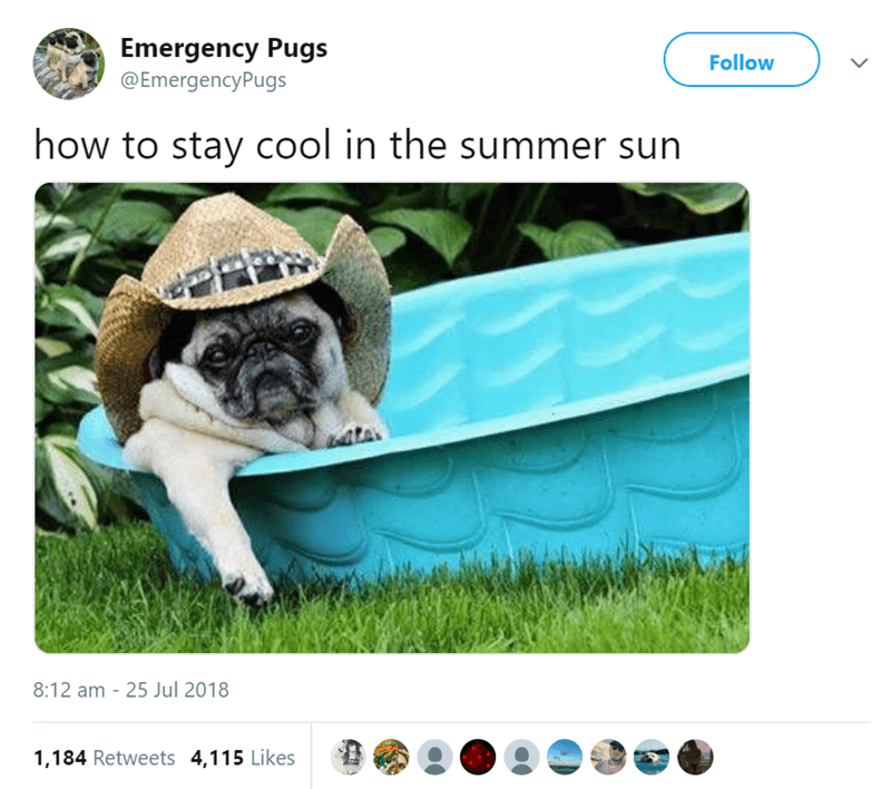 pug tweet - Pug - Emergency Pugs @EmergencyPugs Follow how to stay cool in the summer sun 8:12 am - 25 Jul 2018 1,184 Retweets 4,115 Likes
