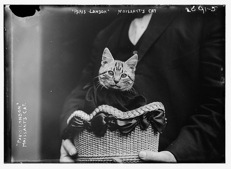 cat book - Cat - AARIS LONDON MOISSANT'S CAT PARIS-LONDON. MOISSANTS CAT