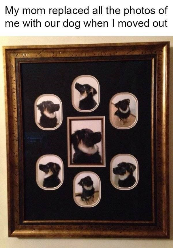 savage moms - Picture frame - My mom replaced all the photos of me with our dog when I moved out