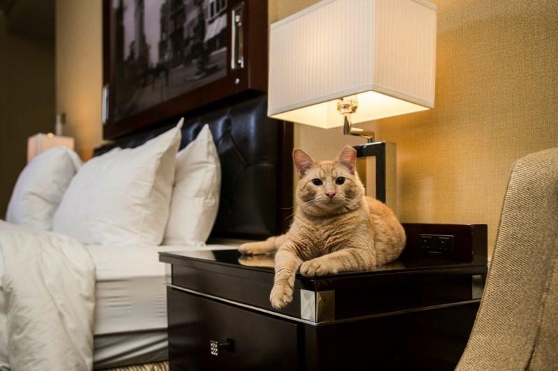 cat book - Room