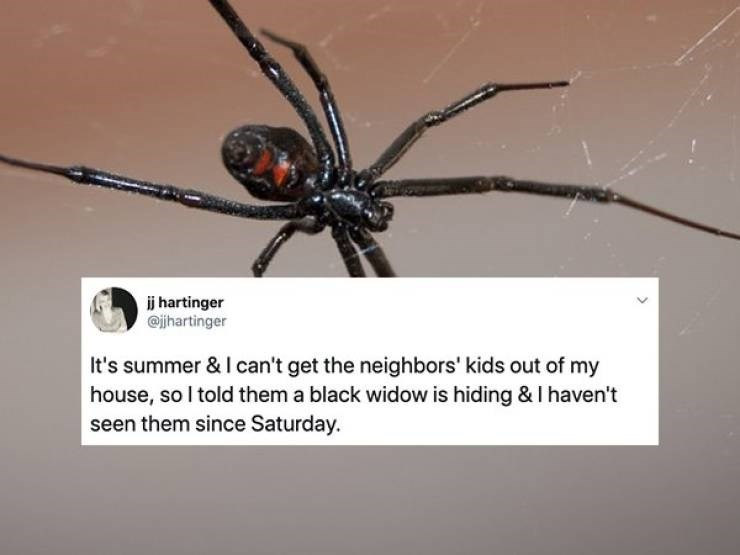 Spider - ij hartinger @jhartinger It's summer & I can't get the neighbors' kids out of my house, so I told them a black widow is hiding & I haven't seen them since Saturday.