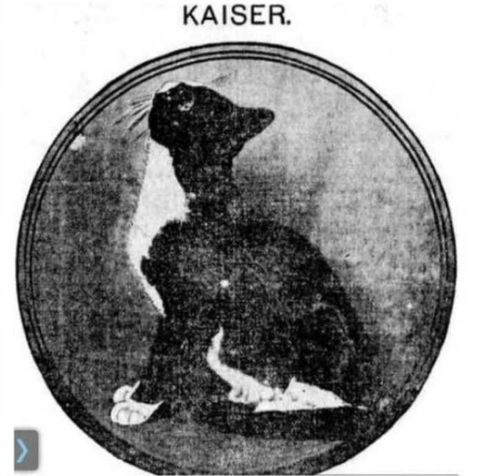 cat book - Canidae - KAISER.