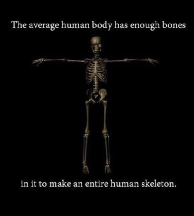 Memes - Skeleton - The average human body has enough bones in it to make an entire human skeleton.