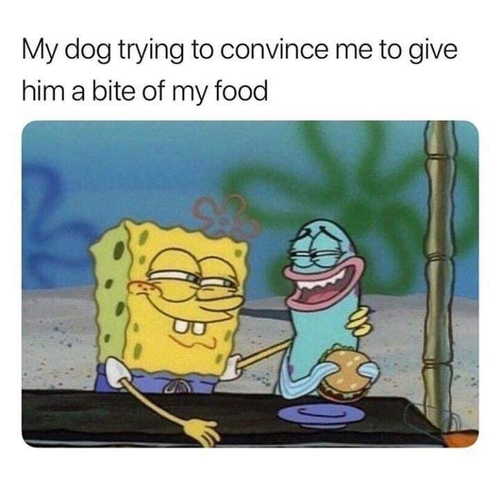 Memes - Cartoon - My dog trying to convince me to give him a bite of my food