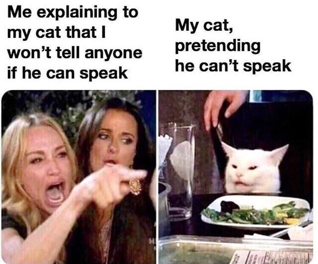 Memes - Facial expression - Me explaining to my cat that I won't tell anyone if he can speak My cat, pretending he can't speak