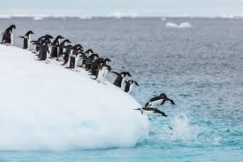 a group of penguins jumping off an iceberg into the water