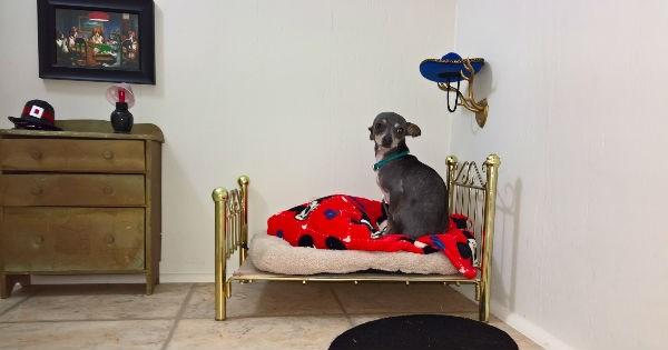 dogs Harry Potter tiny chihuahua bedroom - 932101
