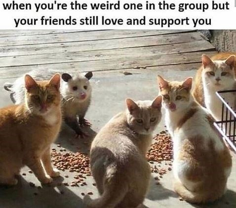Meme - Cat - when you're the weird one in the group but your friends still love and support you