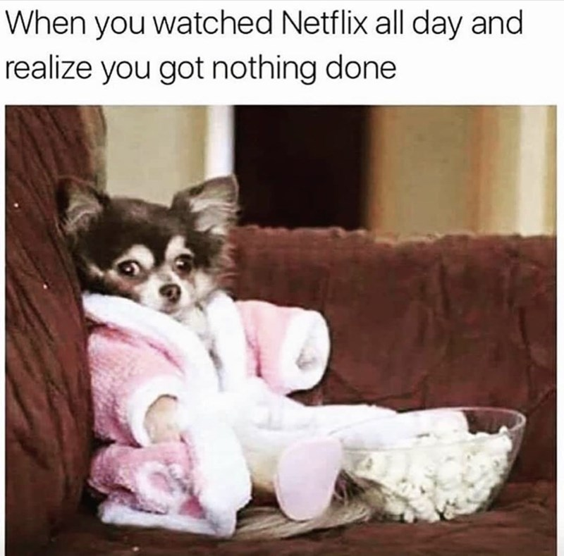 funny meme - Canidae - When you watched Netflix all day and realize you got nothing done