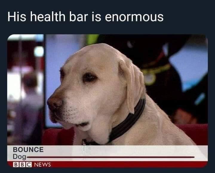 Meme - Dog - His health bar is enormous BOUNCE Dog BBC NEWS