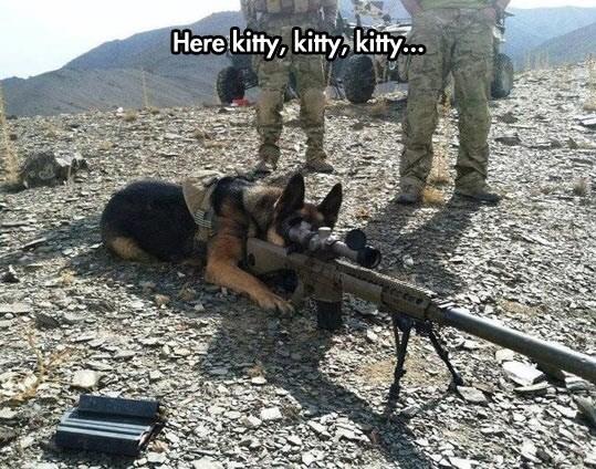Meme - Canidae - Here kitty, kitty kitty..