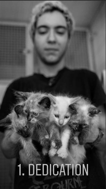 animal photography - Cat - 1. DEDICATION TROHRNE 12QUKNE
