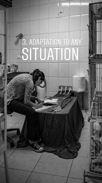 animal photography - Employment - 3. ADAPTATION TO ANY SITUATION