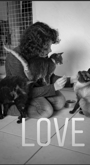animal photography - Cat - LOVE