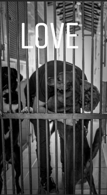 animal photography - Animal shelter - LOVE