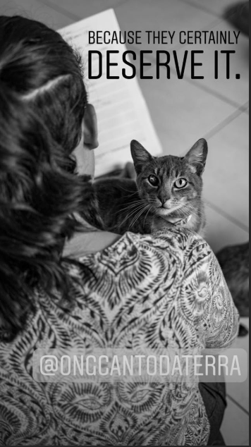 animal photography - Cat - BECAUSE THEY CERTAINLY DESERVE IT. @ONGCANTODATERRA
