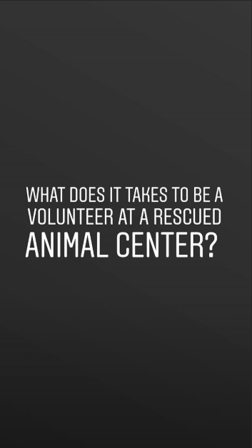 animal photography - Font - WHAT DOES IT TAKES TO BE A VOLUNTEER AT A RESCUED ANIMAL CENTER?