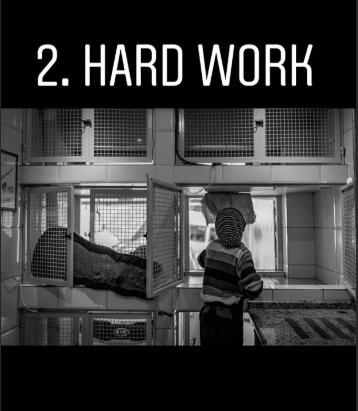 animal photography - Text - 2. HARD WORK