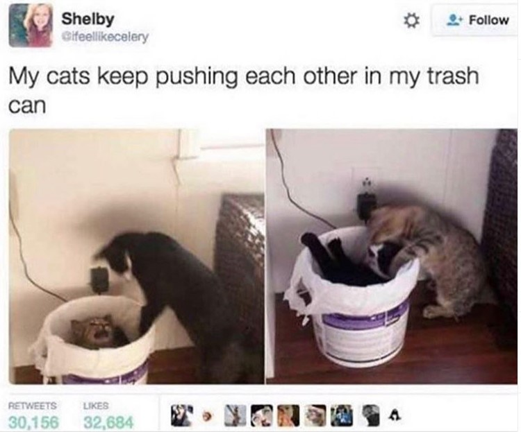 cat meme - Cat - Shelby Cifeellikecelery Follow My cats keep pushing each other in my trash can RETWEETS LIKES 30,156 32,684