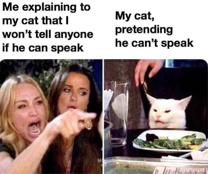 cat meme - Facial expression - Me explaining to my cat that I won't tell anyone if he can speak My cat, pretending he can't speak