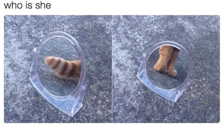 cat meme - who is she