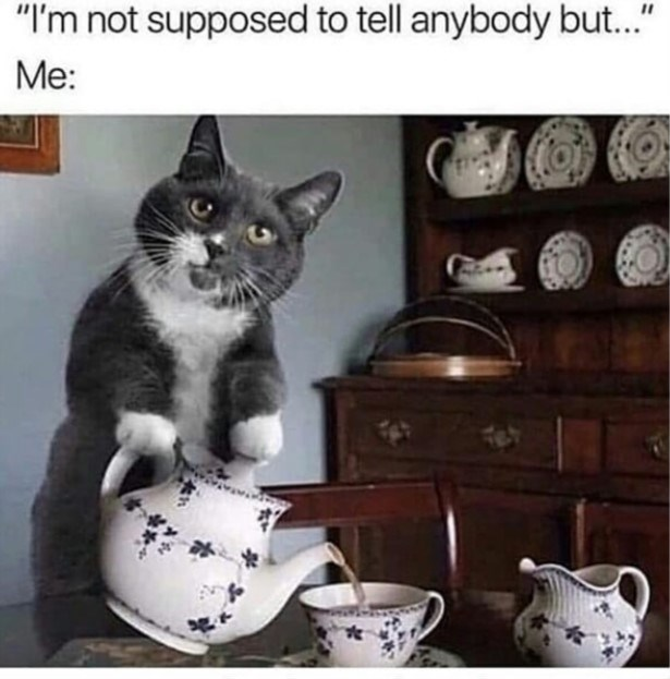 """cat meme - Cat - """"I'm not supposed to tell anybody but..."""" Me:"""