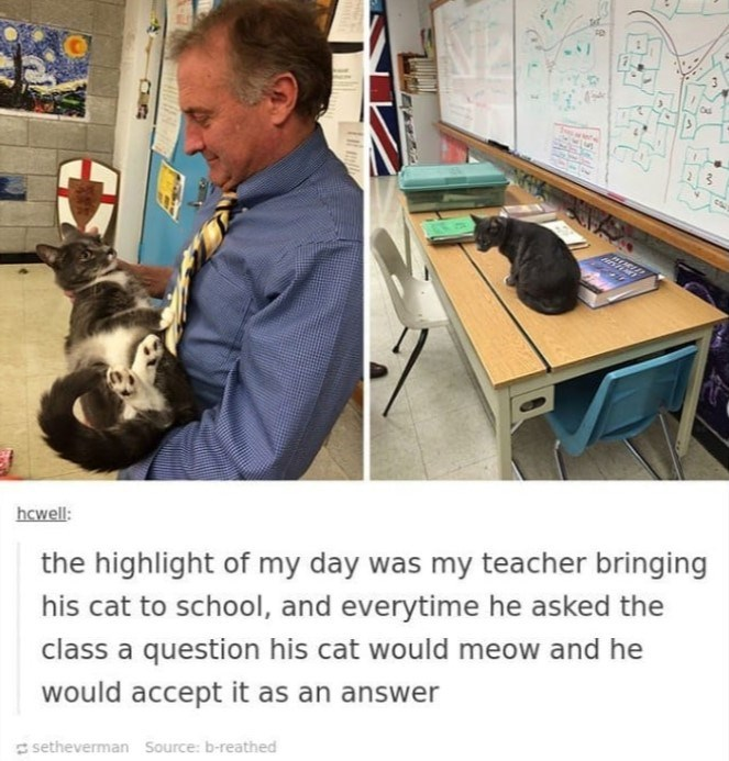 cat meme - Cat - hcwell: the highlight of my day was my teacher bringing his cat to school, and everytime he asked the class a question his cat would meow and he would accept it as an answer setheverman Source: b-reathed
