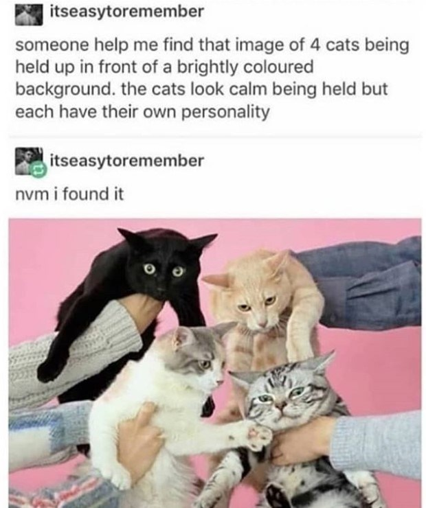 cat meme - Cat - itseasytoremember someone help me find that image of 4 cats being held up in front of a brightly coloured background. the cats look calm being held but each have their own personality itseasytoremember nvm i found it