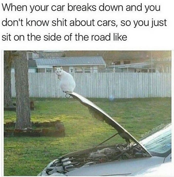 cat meme - Adaptation - When your car breaks down and you don't know shit about cars, so you just sit on the side of the road like Steum strangey