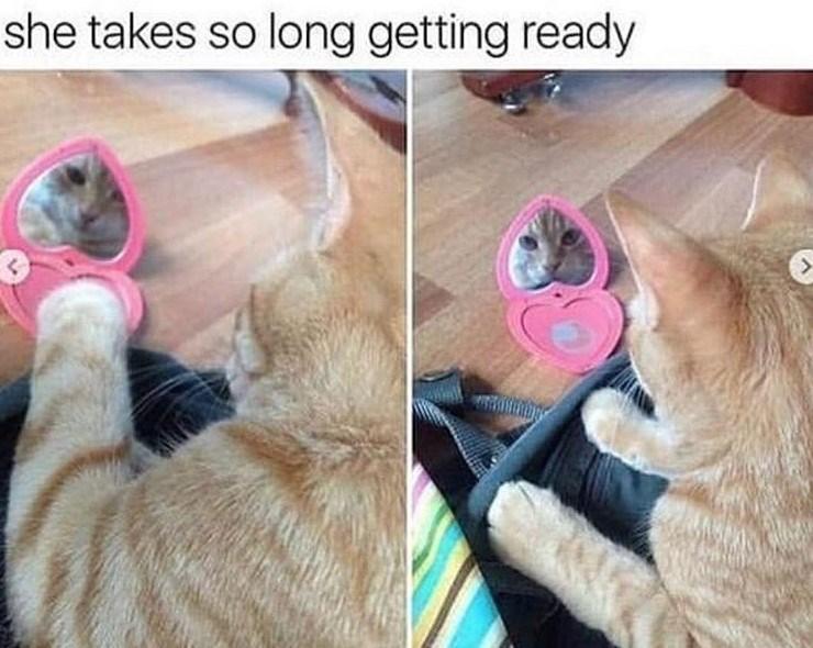 cat meme - Dog breed - she takes so long getting ready >