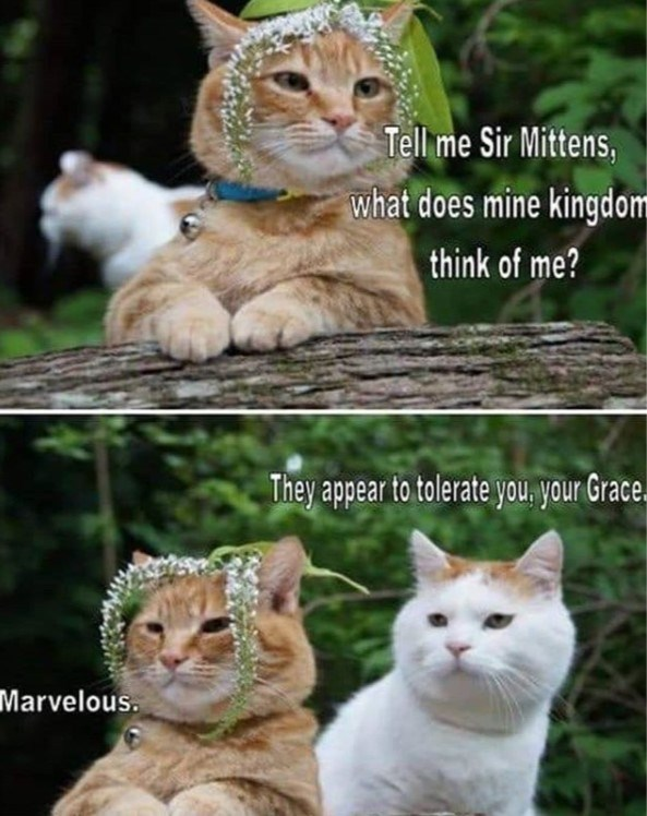 cat meme - Cat - Tell me Sir Mittens, what does mine kingdom think of me? They appear to tolerate you, your Grace. Marvelous.