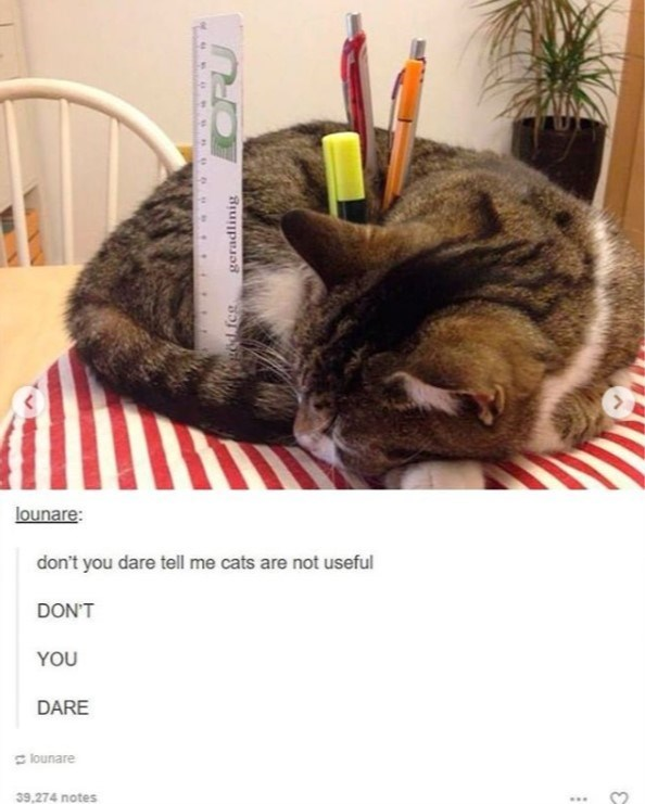 cat meme - Cat - lounare: don't you dare tell me cats are not useful DON'T YOU DARE lounare 39,274 notes geradlinig
