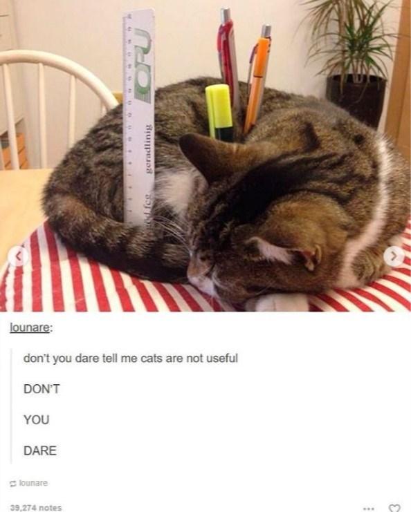 cat meme - Cat - lounare: don't you dare tell me cats are not useful DON'T YOU DARE lounare 39,274 notes geradlinig