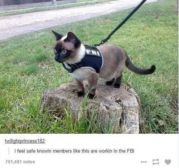 cat meme - Mammal - FBI twilightprincess182 i feel safe knowin members like this are workin in the FBI 701,481 notes